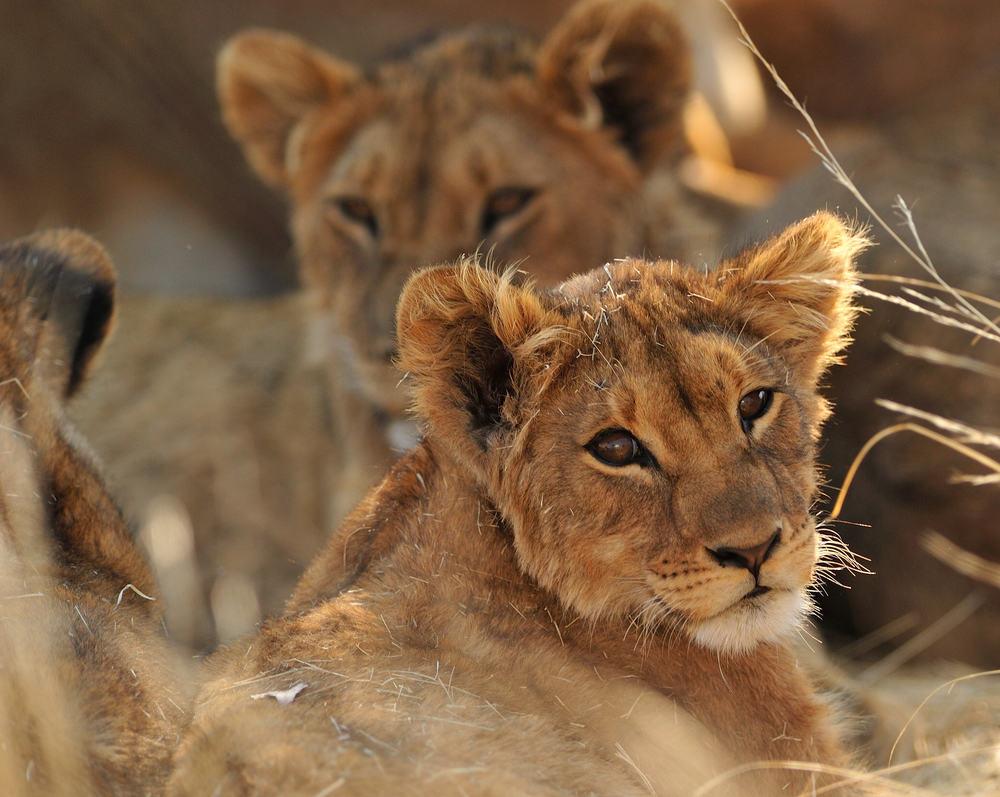 Kruger National Park 2