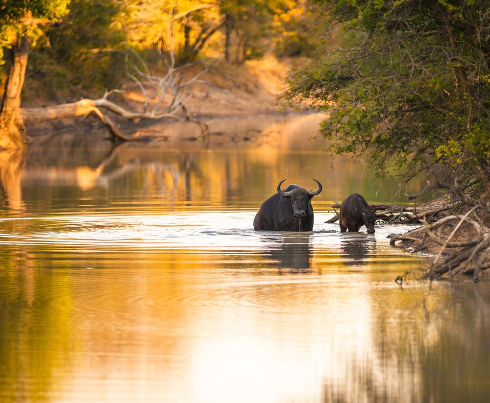 Kruger National Park 6