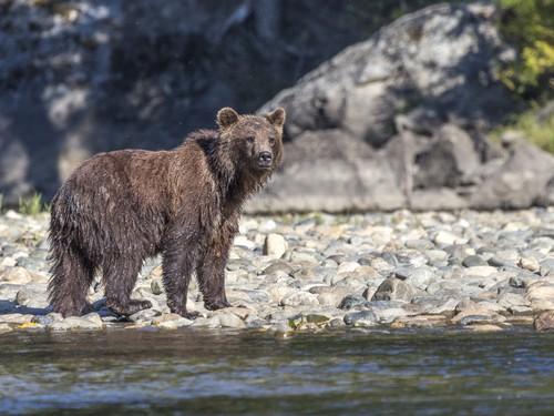 bear-blog
