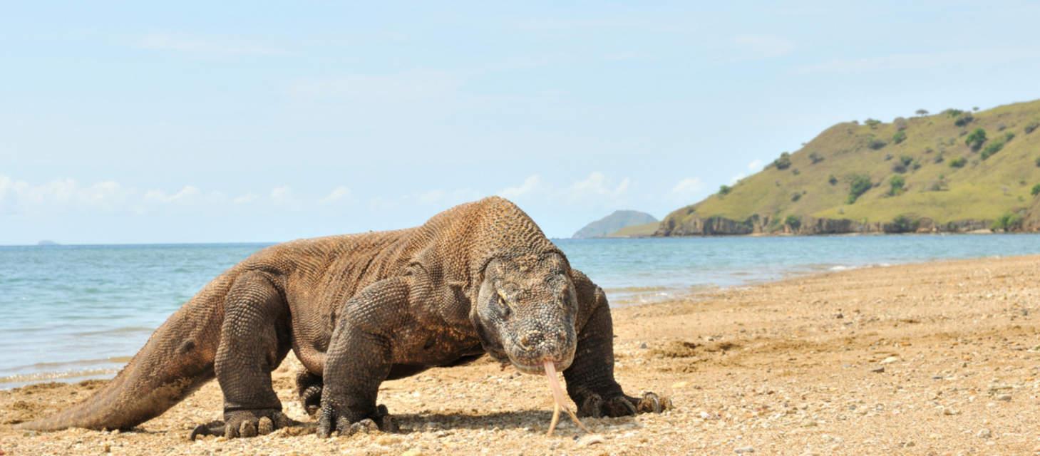 Indonesian Wildlife Adventure Aspen Travel