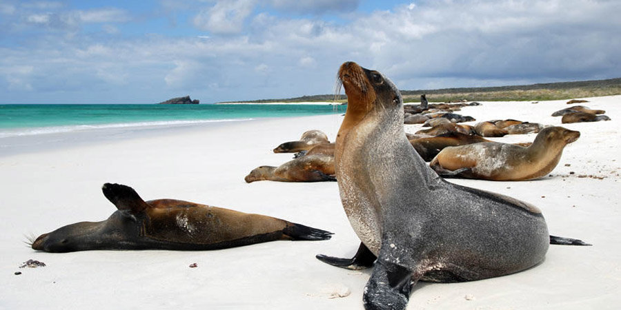 Tren Crucero Amp The Galapagos Islands Aspen Travel