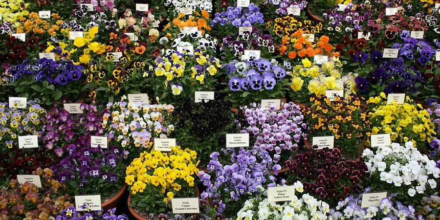 Chelsea Flower Show Tours From Australia