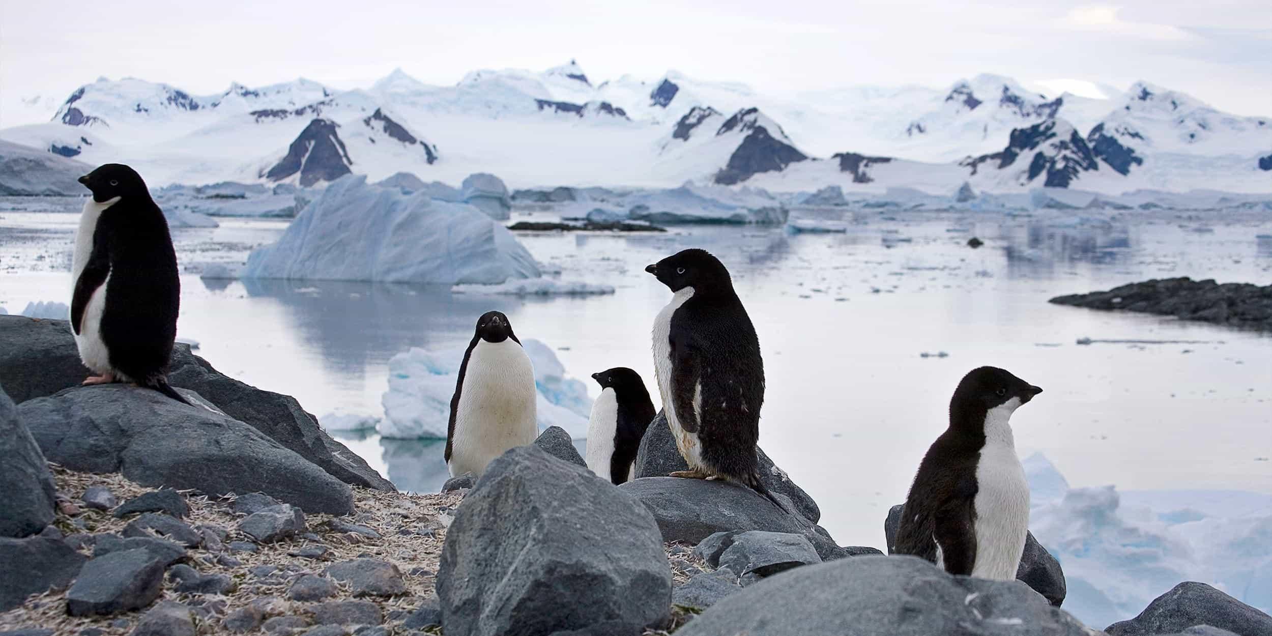 Wildlife In South Georgia And Icy Antarctica Aspen Travel
