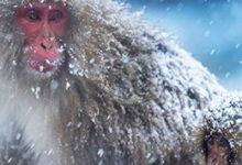 wendy wu tours sapporo snow monkeys private tour