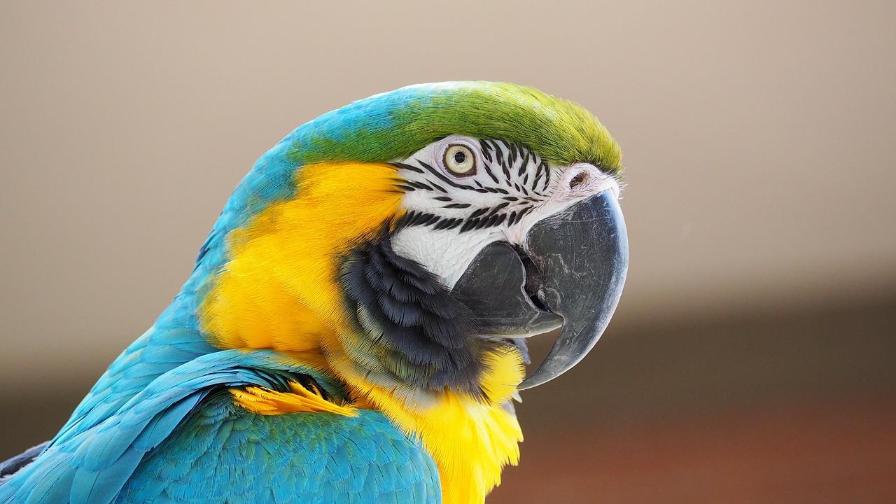 macaw-1416388_1280