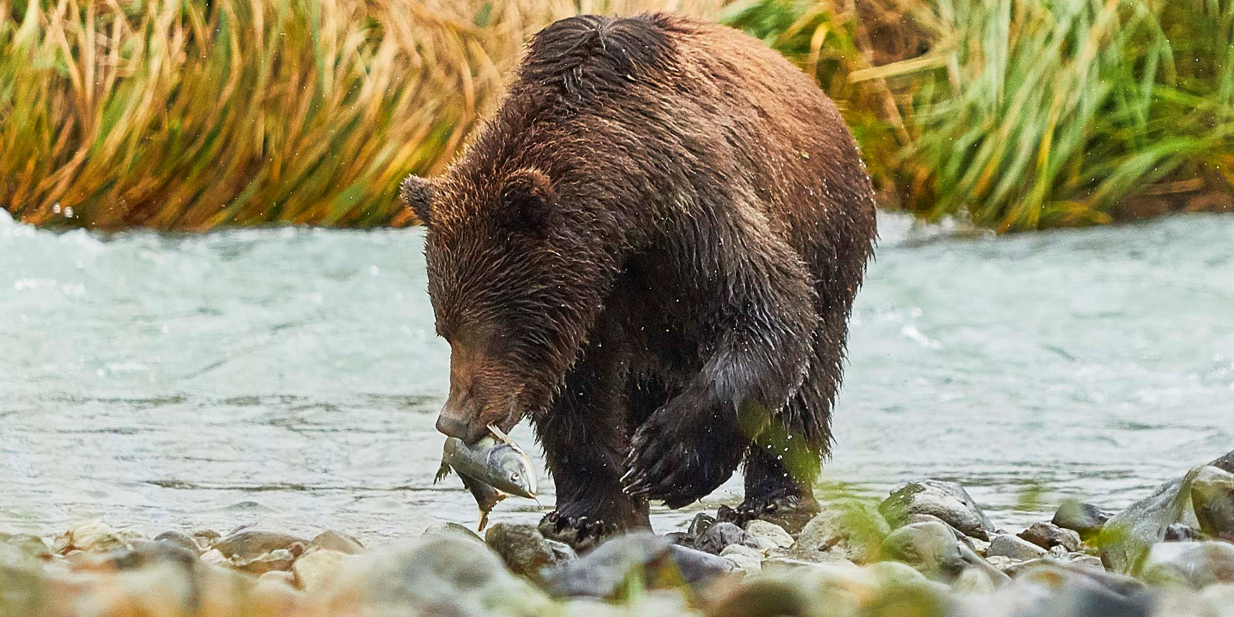 Inside passage, bears and aleutian islands